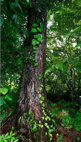 Лиственные деревья названия и фото